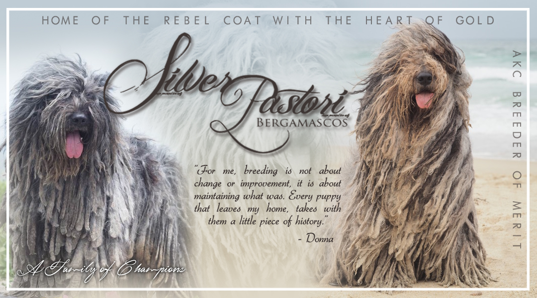 Silver Pastori Bergamascos