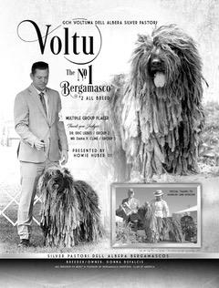 Voltu - Silverpastori News
