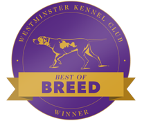 Westminster Kennel Club Best of Breed