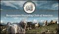 Contact Silver Pastori - BSCA