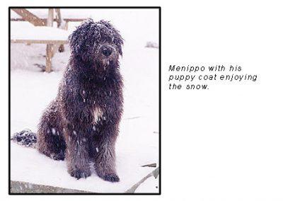Mennipo