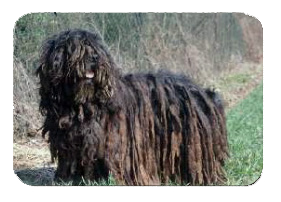 Bergamasco Breed History