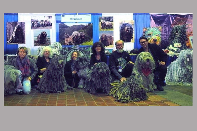 Westminster Dog Show - AKC Meet the Breeds