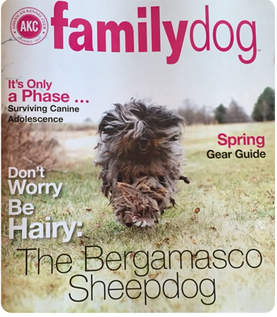 AKC Magazine Cover