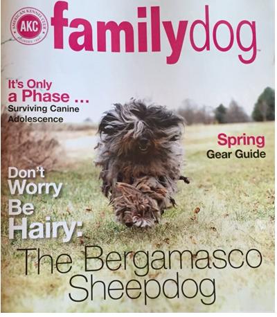 AKC Magazine Cover