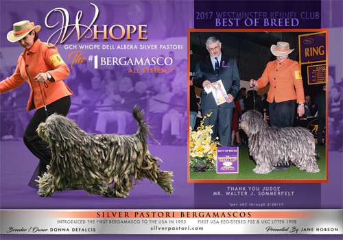 AKC Weekly Winners Gallery - Miss Whope
