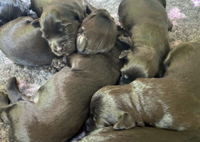 Aether & Gula Puppies - Aug 2021