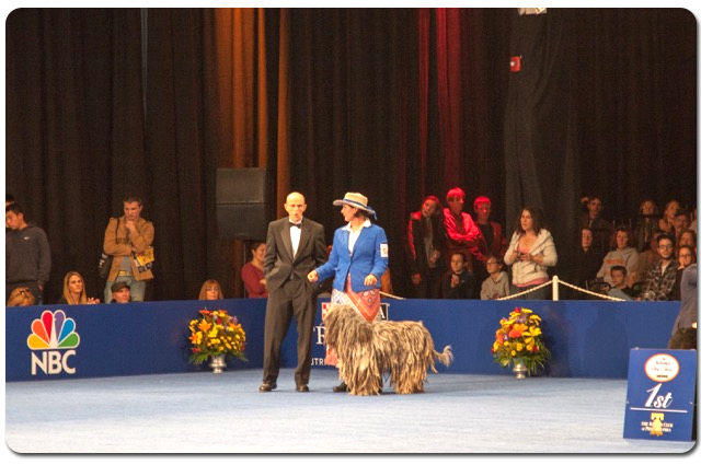Pandia at the National Dog Show