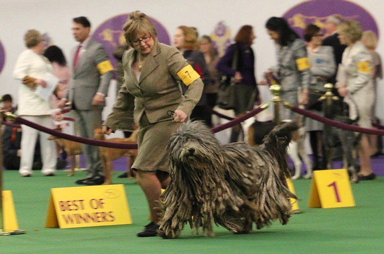 Westminster 2016