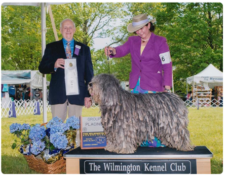 Miss Whope gets a Group 4 at the Wilmington Kennel Club in Bear Delaware